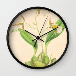emboglossum (Odontoglossum) OrchidVintage Botanical Floral Flower Plant Scientific Illustration Wall Clock