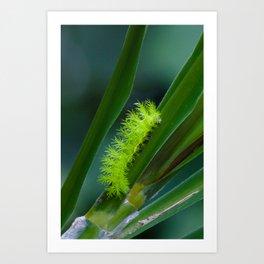 IO moth caterpillar Art Print