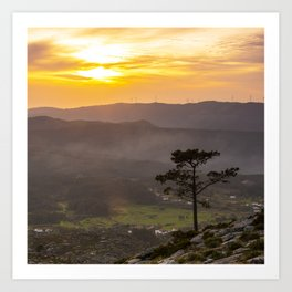 A lonely pine tree in the mountain Art Print