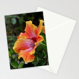 Pink Grapefruit Stationery Cards