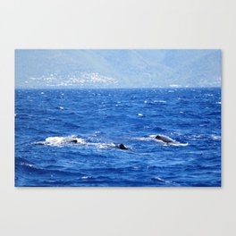 Whale Watching in the Caribbean Canvas Print