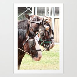 Clydesdales - Ready for Work Art Print