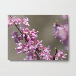 Redbud Flowers Metal Print