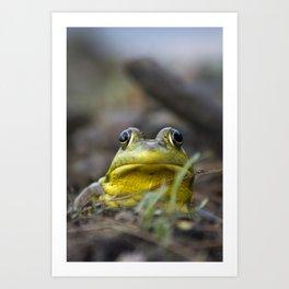 Northern Green Frog Art Print