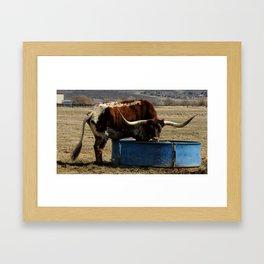 Long Horn Steer Framed Art Print