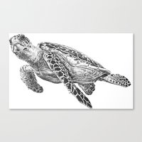 sea turtle Canvas Prints featuring Sea Turtle by Laura Hines