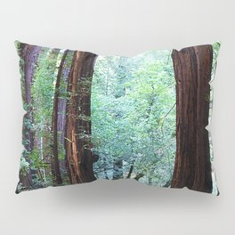 Muir Woods 2 Pillow Sham