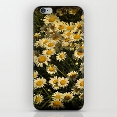 Field of Daisies iPhone & iPod Skin