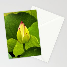 Lotus Bud Opens in Sydney Stationery Cards