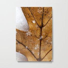 snowflakes on a leaf Metal Print