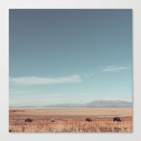 bison Canvas Prints featuring Bison by Joe Young
