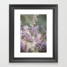 Detail of wild heather growing on a heath with early morning light. Norfolk, UK. Framed Art Print