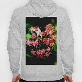 Cacti (Cactaceae) Hoody