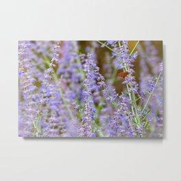 Orange moth sits on a lavender bush in Albuquerque, New Mexico, USA Metal Print