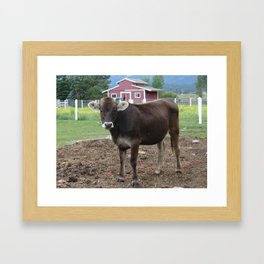 #406 bitterroot 406 cows next to me  Framed Art Print
