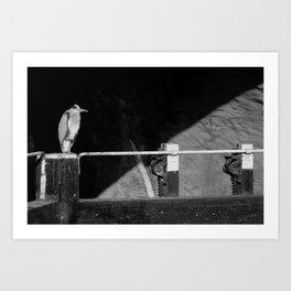 Heron, Royal Canal Lock, Dublin, Ireland Art Print