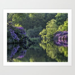 Summer lake reflections Art Print