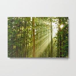 A Light Peeks Through Metal Print