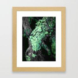 Lichen Framed Art Print