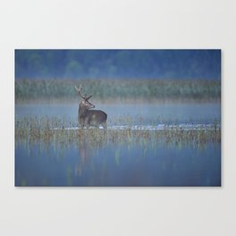 Early morning over the lake Canvas Print