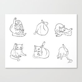 cat butts Canvas Print