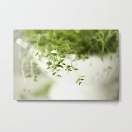 Fresh Herb In A White Pot #decor #society6 Metal Print