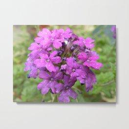 Phlox Flowers Metal Print