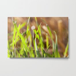 green sprout grass Metal Print