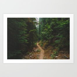 Into The Forest - Pacific Crest Trail, Washington Art Print