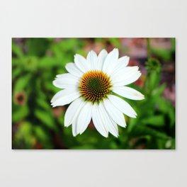 White Coneflower Canvas Print
