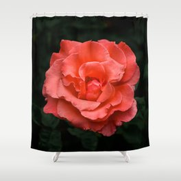 Touch of Class hybrid orange rose is blooming Shower Curtain