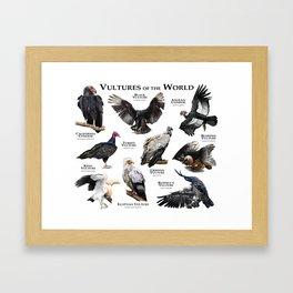 Vultures of the World Framed Art Print