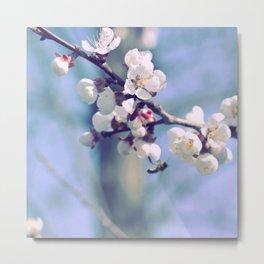 Sakura B1 Metal Print