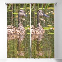 Quacker Blackout Curtain