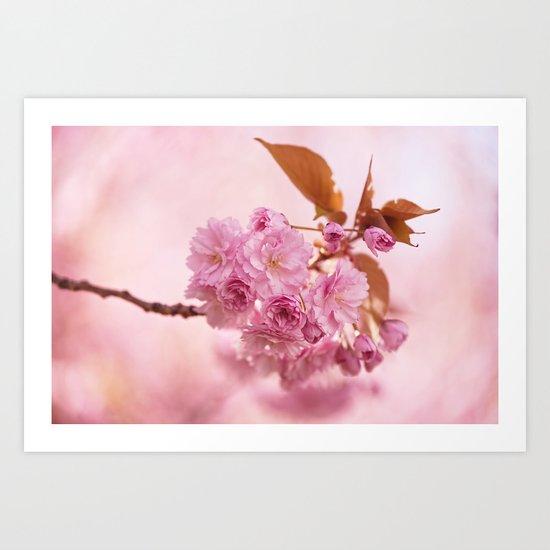 Sakura - Cherryblossom - Cherry blossom - Pink flowers 1 Art Print