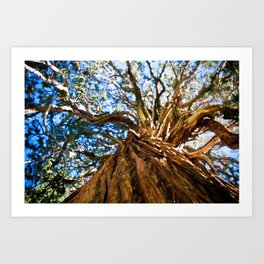 Looking Up A Tree Art Print
