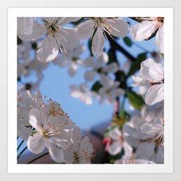 Blooming in White Art Print