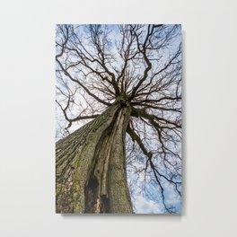 Titan Tree Metal Print