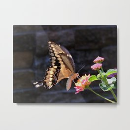 Swallowtail Overexposed Metal Print