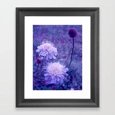 Meadow of Dreams Framed Art Print