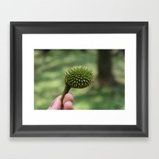 BABY DURIAN  Framed Art Print