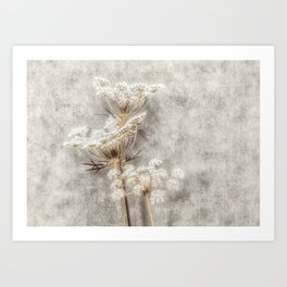French Country Queen Anne's Lace Art Print