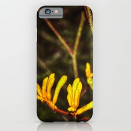 Yellow Kangaroo Paw flower against a blurred background iPhone Case