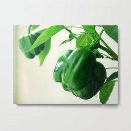 Peppers food green Metal Print