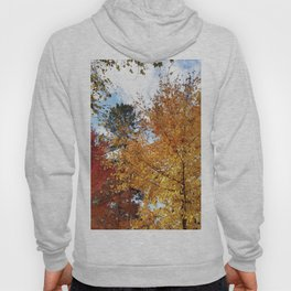 Sugar Maples in all their glory Hoody
