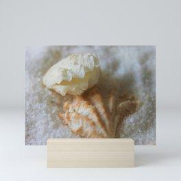 Seashells 1 Mini Art Print
