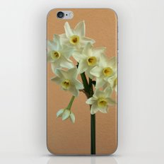 Orange Narcissus iPhone & iPod Skin