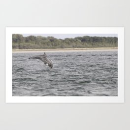 Playful young dolphin Art Print