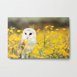 Australian Barn Owl (Tyto Alba) Metal Print