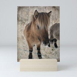 snowy Icelandic horse Mini Art Print